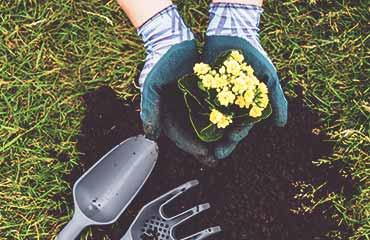 Startseite-blume-einpflanzen-bild-1