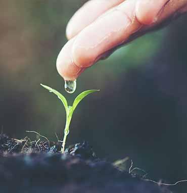 Startseite-kleine-pflanze-bild1