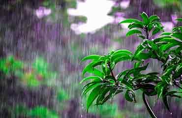 regenwasser-garten